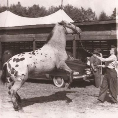 horse, Dot